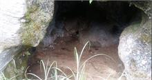 सड़क की खुदाई में निकली देव मूर्तियां और गुफा