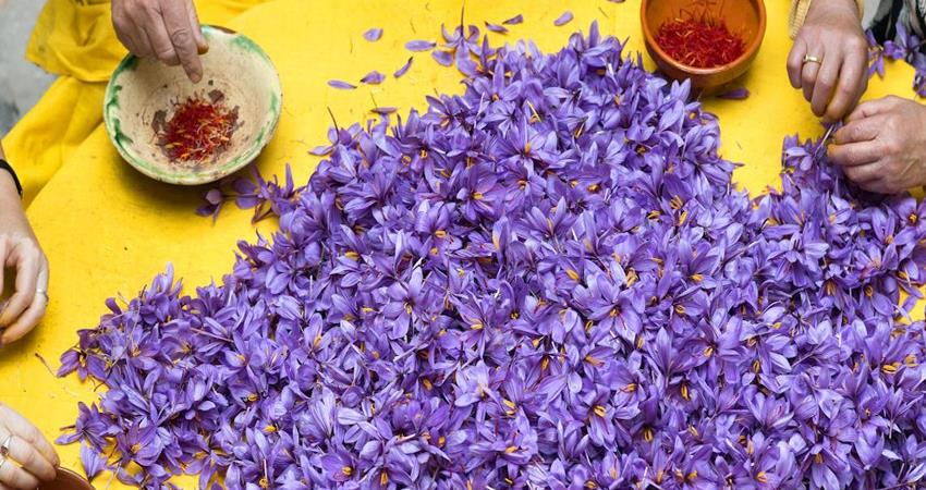 health benefits of saffron in hindi