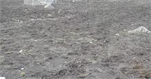 केदारनाथ में निर्माण सामग्री लेकर आ रहे घोड़े खच्चर रौंद रहे बुग्याल
