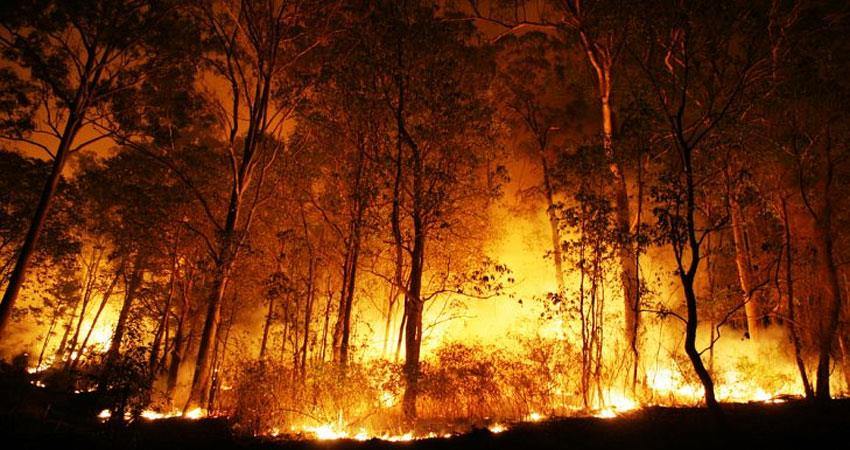 uttarakhand-supreme-court-adjourns-hearing-on-filing-of-fir-against-forests