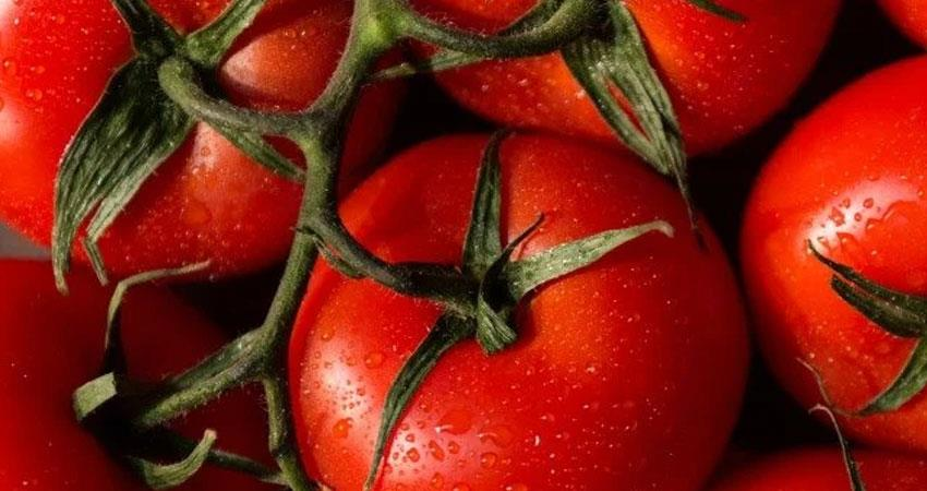tomatoes are being thrown first in market today prices are touching sky rkdsnt