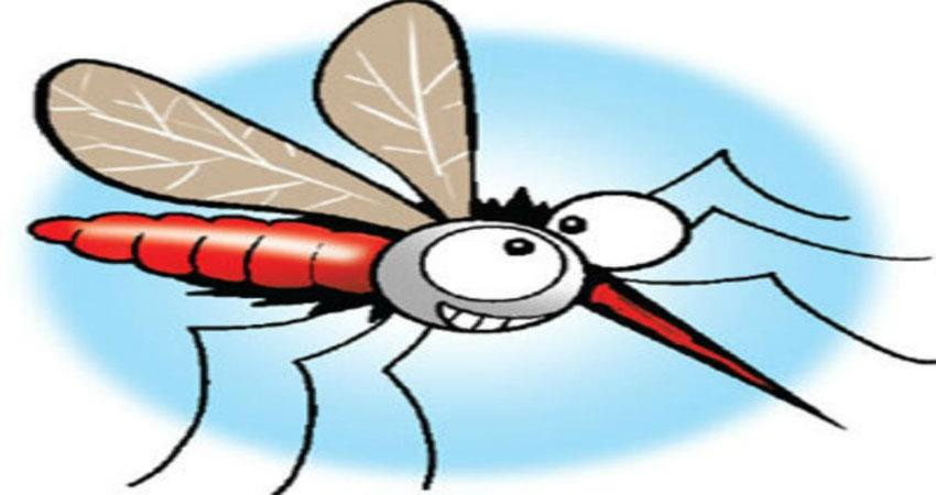 delhi municipal cooperation launches new guidelines for spreading mosquito diseases