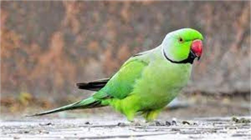 parrot lost, lost senses, noida police could not find it even after six months