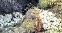 हिमाचल प्रदेशः हाईवे पर मिले सैंकड़ोंमृत मुर्गे-मुर्गियां, मचा हड़कंप