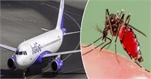 विमान में मच्छरों का आतंक कंपनी को पड़ा महंगा, देना होगा लाखों का जुर्माना
