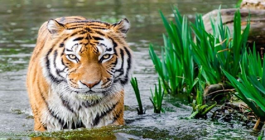 uttarakhand increased vigilance in all national parks wildlife sanctuaries and zoos albsnt